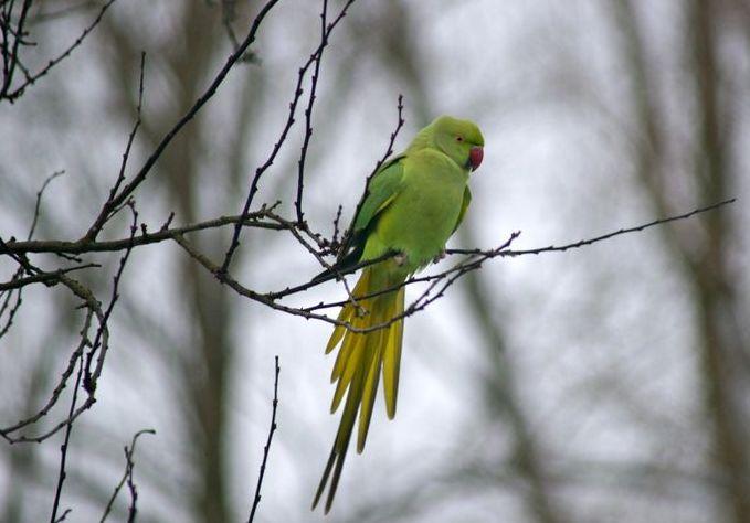Keistas paukštis